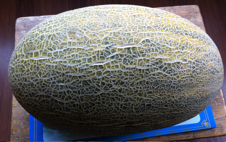 SeaStar melon after 42 days